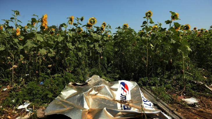 Sunflowers surround the downed MH17 crash site in east Ukraine.  Photo: Kate Geraghty
