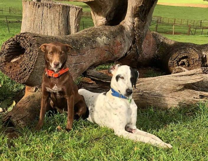 LOST: Tikka and Boof have been missing for a year now since fleeing the Dunns Road bushfire, but owner Jen Lawton has not given up hope of them coming home. Picture: Contributed