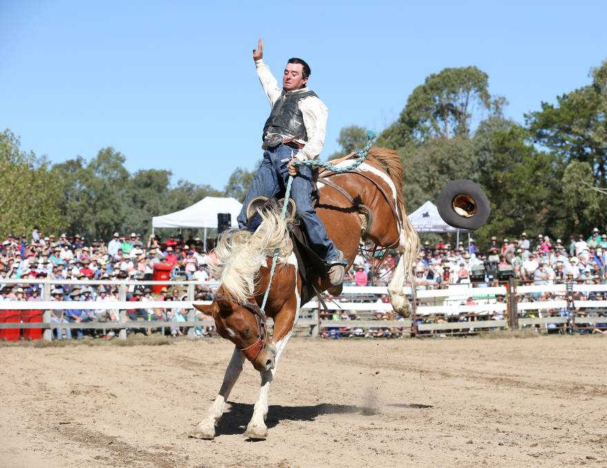CROWD PLEASER: Morgan Webb, of Tumut, tries to hang on during the stock saddle buckjump at the 2019 Man from Snowy River Bush Festival. Picture: KYLIE ESLER