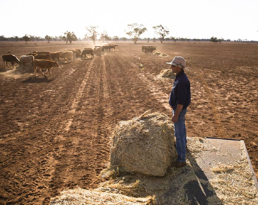STARK REMINDER: Angus Barclay sees the impact of drought as he feeds stock in Warren. Picture: KRYSTLE WRIGHT